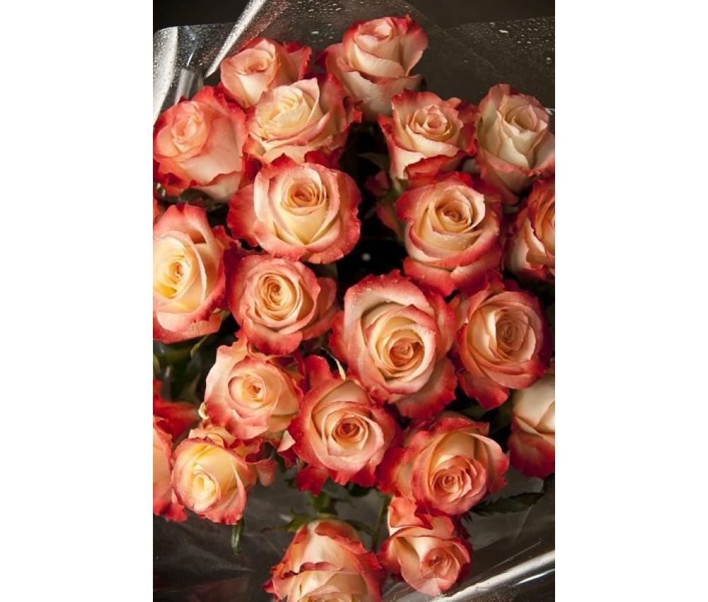 Роза дуэт