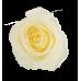 Букет 25 белых роз 70 см.